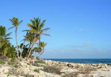Palmen op overzeese kust in de Caraïben Stock Fotografie