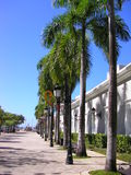 Palmen op straat Royalty-vrije Stock Foto's