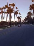 Palmen op straat Stock Afbeeldingen