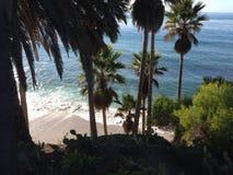 Palmen op strand Stock Afbeelding