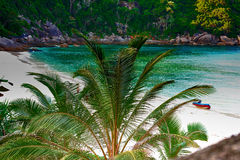 Palmen op strand Royalty-vrije Stock Foto