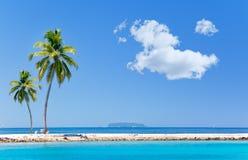 Palmen op tropisch eiland bij oceaan. Landschap Royalty-vrije Stock Foto