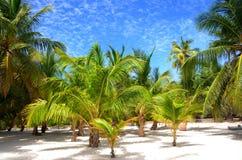 Palmen op tropisch eiland Saona royalty-vrije stock afbeelding