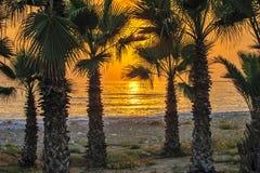 Palmen op Tropisch Strand Royalty-vrije Stock Fotografie