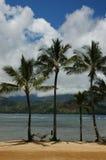 Palmen op Tropisch Strand Stock Afbeelding