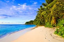 Palmen op tropisch strand Royalty-vrije Stock Foto's