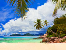 Palmen op tropisch strand Stock Fotografie