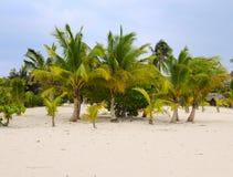 Palmen op tropisch strand Stock Afbeeldingen