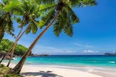 Palmen op tropisch strand in paradijseiland royalty-vrije stock fotografie