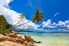 Palmen op tropisch strand - Seychellen Stock Foto's