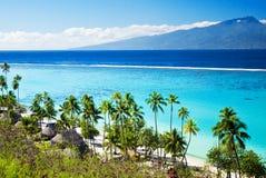 Palmen op tropisch strand in Tahiti Stock Foto's