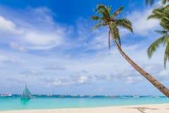 Palmen op tropische strand en overzeese achtergrond, de zomervakantie Stock Foto's