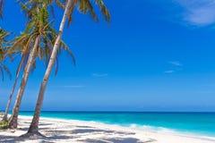 Palmen op tropische strand en overzeese achtergrond, de zomervakantie Stock Foto
