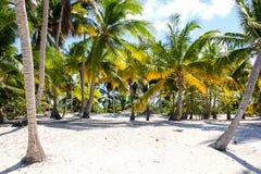 Palmen op zandig strand Royalty-vrije Stock Foto's