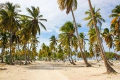 Palmen op zandig strand Royalty-vrije Stock Afbeelding