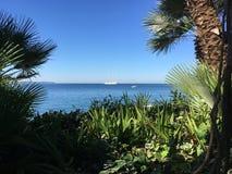 Palmen op zeekust royalty-vrije stock fotografie