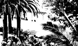 Palmen op zwart-witte achtergrond Stock Fotografie