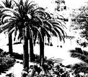 Palmen op zwart-witte achtergrond Tropische palmenachtergrond Exotisch Landschap Stock Afbeelding
