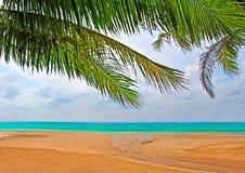 Palmen over het zand Royalty-vrije Stock Afbeeldingen