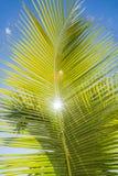 Palmen-Ozean-Himmel lizenzfreies stockfoto