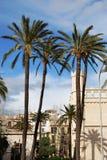 Palmen in Palma de Majorca Stockfotos