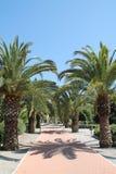 Palmen in Paloma Park, Benalmadena-Costa Stockbilder