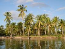Palmen-Paradies Lizenzfreies Stockfoto