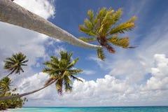 Palmen-Paradies Lizenzfreie Stockfotos