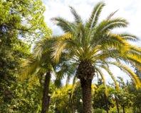 Palmen in park Stock Foto