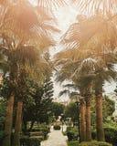 Palmen in parkourdoor Reisfoto in Turkije Royalty-vrije Stock Fotografie