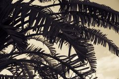 Palmen - perfekte Palmen Stockfotos