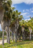 Palmen - perfekte Palmen Lizenzfreie Stockbilder