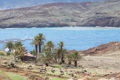 Palmen in Ponta DE Sao Lourenco, Madera, Portugal Royalty-vrije Stock Afbeelding