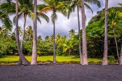 Palmen am Punaluu-Schwarz-Sand-Strand auf großer Insel, Hawaii stockfotografie