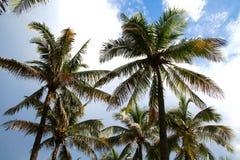 Palmen in Recente Middagzon Stock Foto