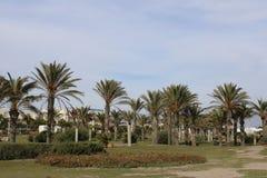 Palmen in recreatief park royalty-vrije stock afbeeldingen