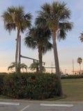 Palmen rond Schemer Stock Afbeelding