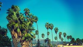 Palmen rudern mit Hollywood-Zeichen auf dem Hintergrund lizenzfreies stockfoto