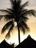 Palmen-Schattenbild Stockfoto