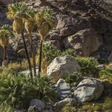 Palmen-Schlucht am Nationalpark Anza Borrego, Kalifornien stockbild