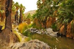 Palmen-Schlucht, Palm Springs Lizenzfreies Stockbild