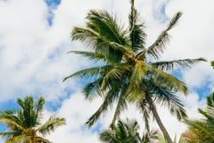 Palmen in Seychellen stockbilder