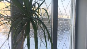 Palmen in Siberië royalty-vrije stock afbeelding