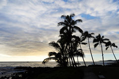Palmen silhouettiert durch Meer Stockfotos