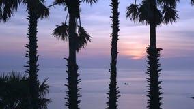 Palmen silhouettiert gegen blauen Himmel stock footage