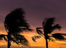 Palmen silhouettiert gegen blauen Himmel Stockfoto