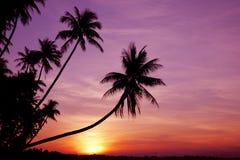 Palmen am Sonnenaufgang Stockfoto