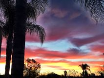 Palmen am Sonnenaufgang Stockbilder