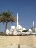 Palmen-Sonnensommer UAE Abu Dhabi Sheikh Mosque Stockfoto