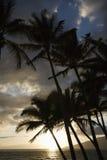 Palmen am Sonnenuntergang. Stockbild